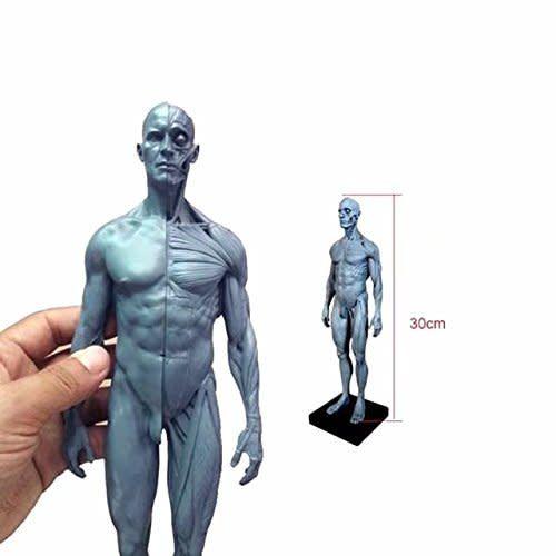 Ecorche Male Figure 12in