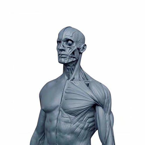 Just Sculpt Ecorche Male Figure 12in