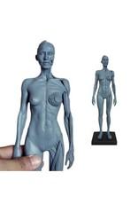 Ecorche Female Figure 12in