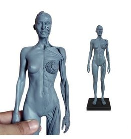 Ecorche Female Figure 12in