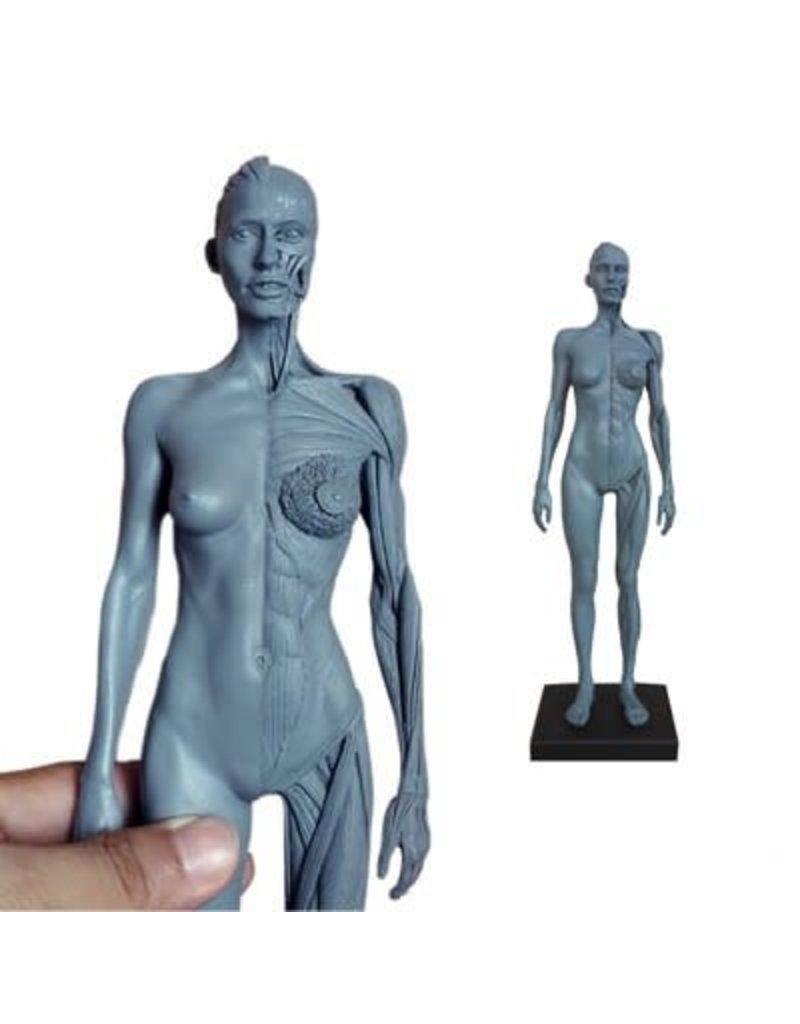 Just Sculpt Ecorche Female Figure 12in