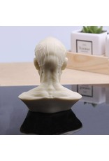 Anatomical Bust Male 4in