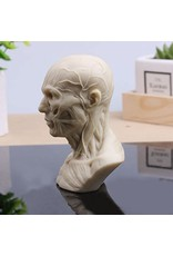 Just Sculpt Anatomical Bust Male 4in