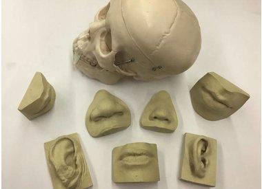 Anatomical References