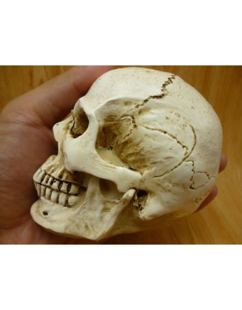 Just Sculpt Skull (2 part) Silicone Mold