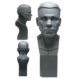 Planes of the Head Study Model Small