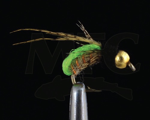 MFC BH LIme Pupa