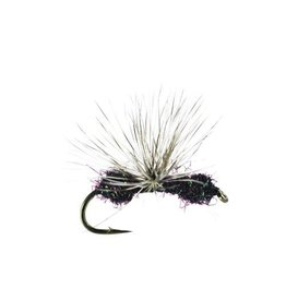 Glitter Ant, Quigley, Black, 16, (3  Pack)