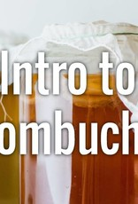 Intro to Kombucha Sunday 2/24/19 - 11 to 1pm