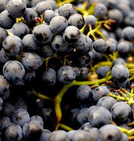 Wine Petit Syrah Fresh Grapes 36 lb box