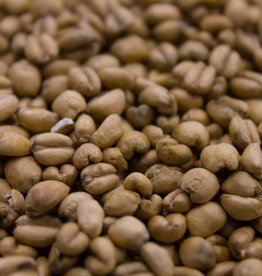 Torrified Wheat