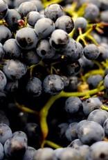 Wine Old Vine Zinfandel Fresh Grapes 36 lb Box