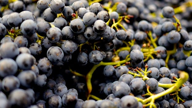Wine Cabernet Franc Fresh Grapes 36 lb Box