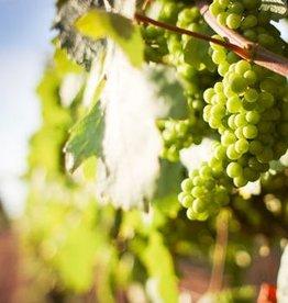 Wine Muscat Fresh Grapes 36 lb Box