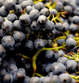 Wine Merlot Fresh Grapes 36 lb Box