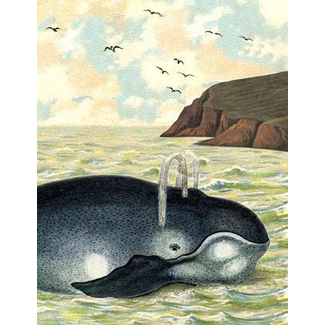 Cartolina, Sea Creature Card