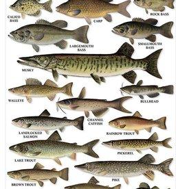 Freshwater Gamefish Poster of Northeast