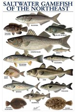 Saltwater Gamefish Poster of Northeast