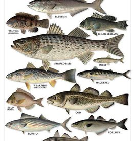 Saltwater Gamefish Poster of Northeast