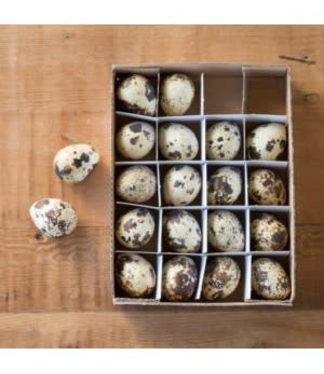 Park Hill Collections Quail Eggs Set of 20