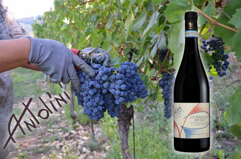 Wine Antolini Valpolicella Ripasso Classico Superiore 2015