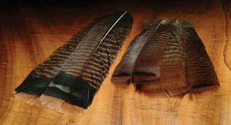 WAPSI Ozark Turkey Tail -  Cinnamon Tip