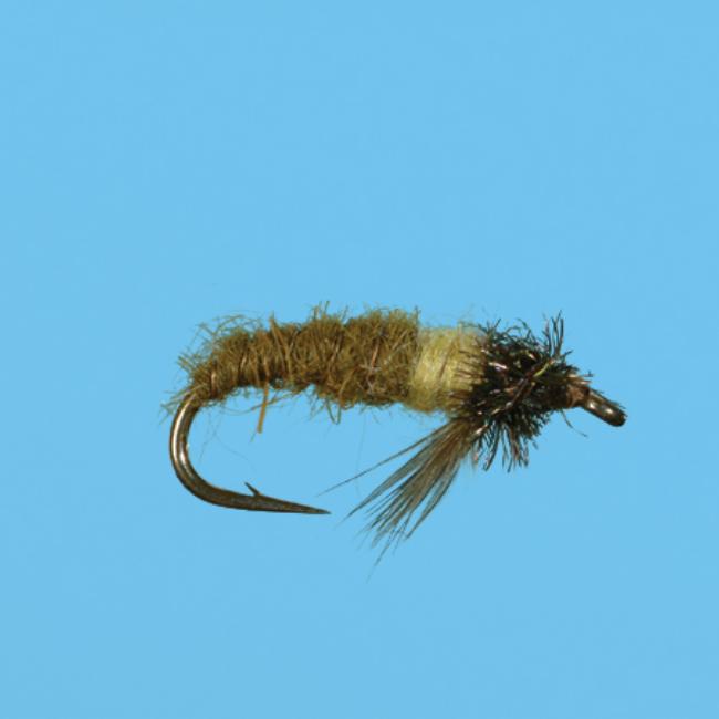 Caddis Larva Peeking - Olive
