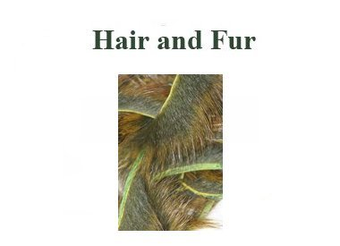 HAIRS AND FUR