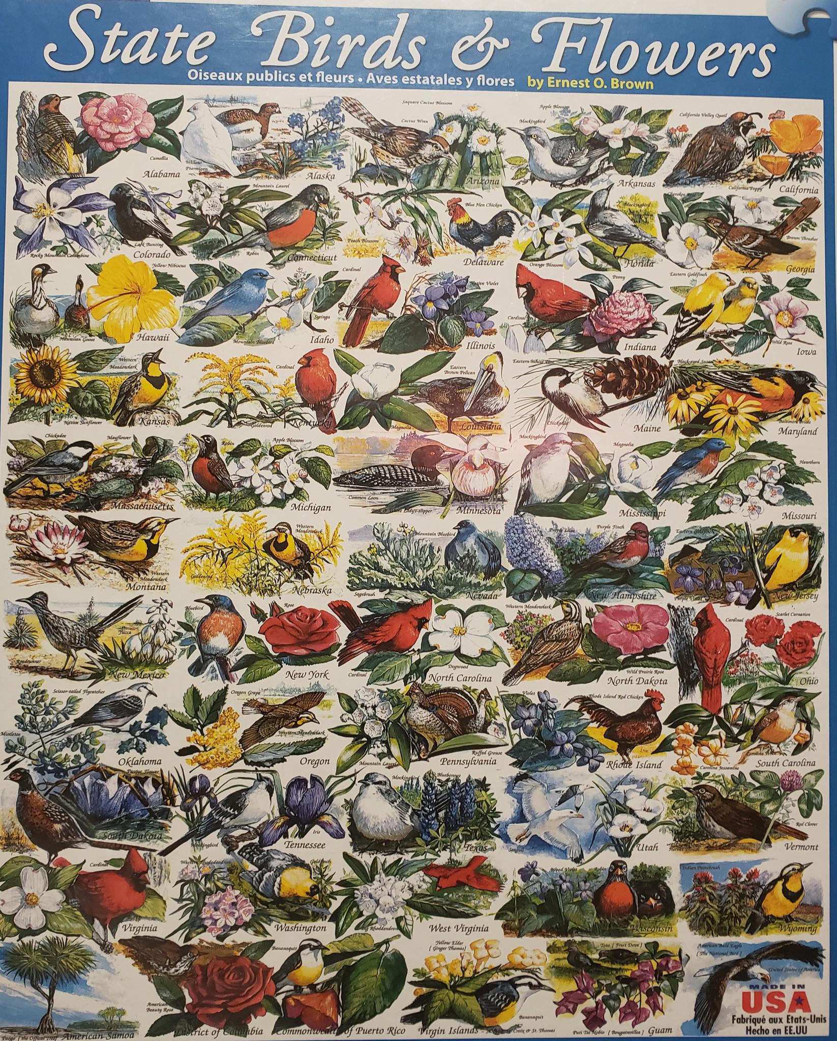 State Birds & Flowers