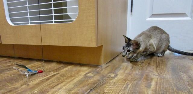 Luxury Cat Boarding | Houston, TX | Nourish Pet Care