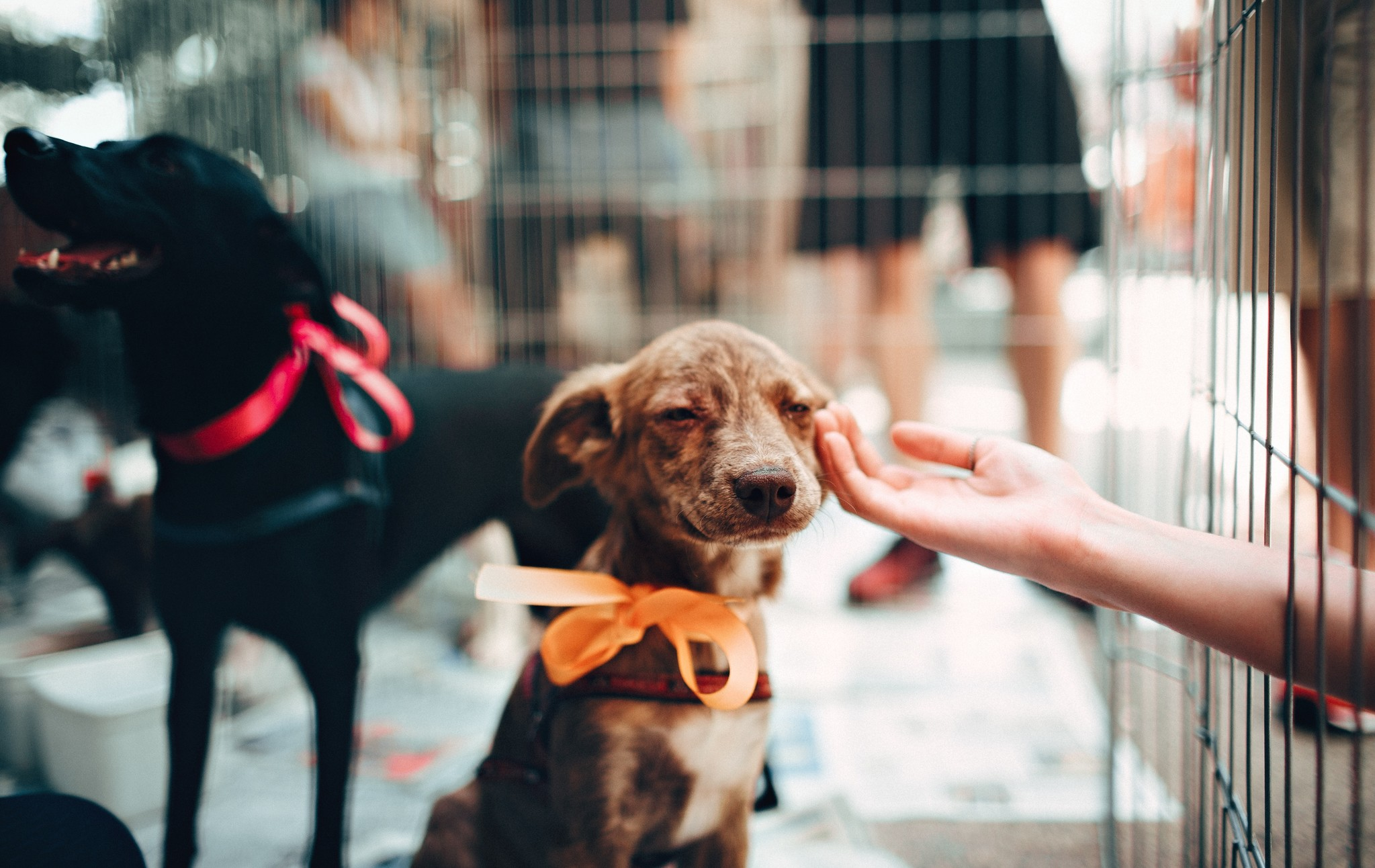 So You Brought Home a New Dog: Now What?
