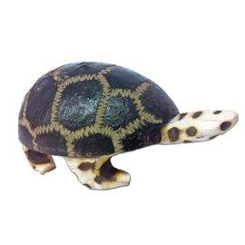 Jamtown Turtle Shaker by Jamtown