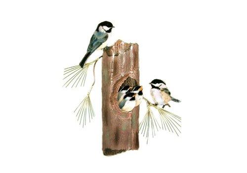 Chickadees Nesting