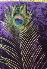 Peacock Eye Feather