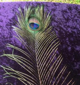 Peacock Eye Feather