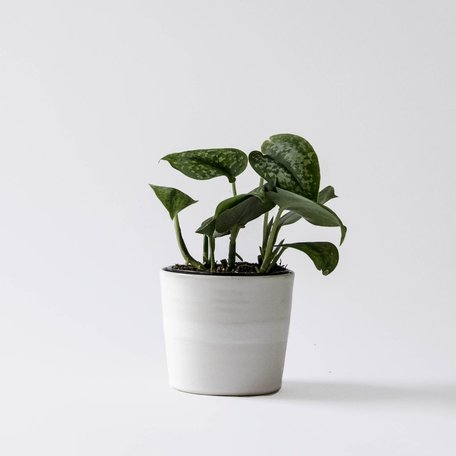 Planter -White Collection