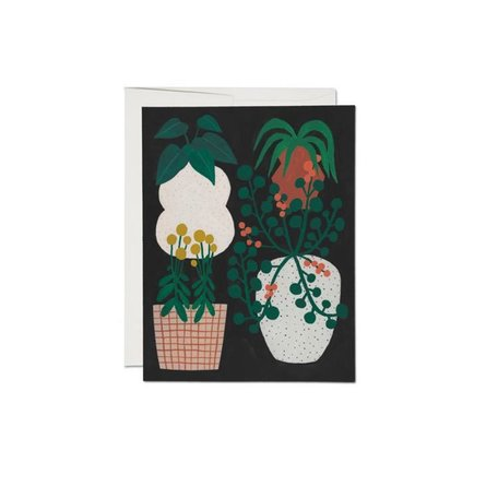 Indoor Plants Card -Box/8