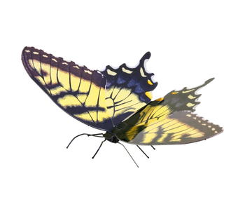 Metal Earth 3D Model : Tiger Swallowtail