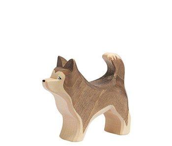 Ostheimer Sled Dog, Standing
