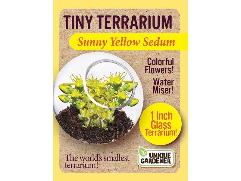 TINY TERRARIUM - SUNNY YELLOW SEDUM