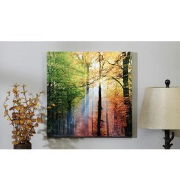 Sunlight in the Forest Canvas Wall Print