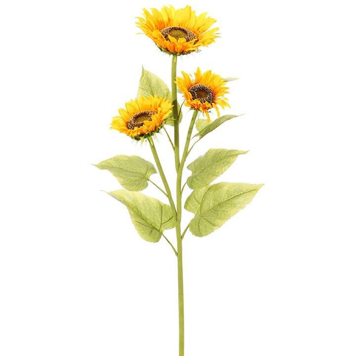 Sunflower Stem Beckman S