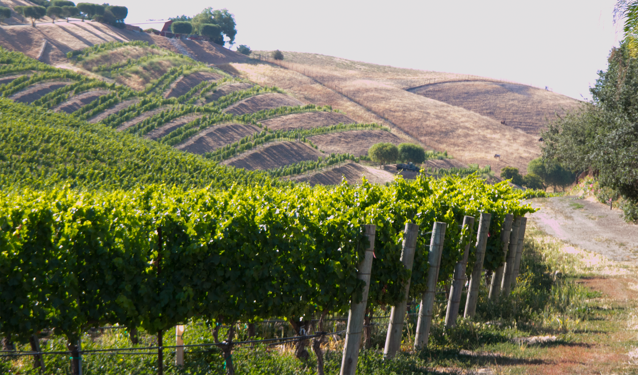 Two Thrilling Wineries Showcasing the Ballard Canyon AVA