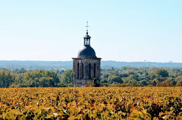 Triumphant White Wines