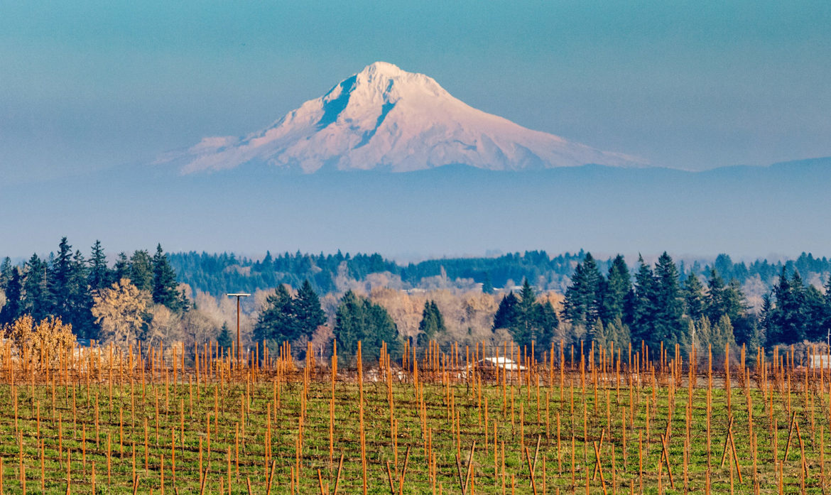 Lingua Franca--Making Exceptional Wines from Oregon's Eola-Amity Hills