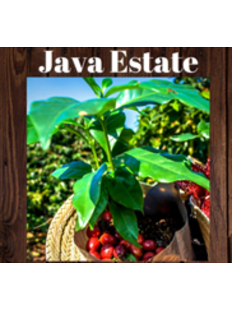 Sheldrake Coffee Roasting, Java Estate Whole Bean Coffee, 1 lb bag