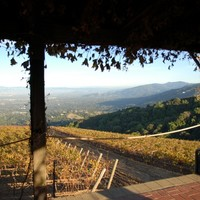 VINES THAT GROW AMONG THE REDWOODS: SMALL VINTAGE WINES FROM SANTA CRUZ
