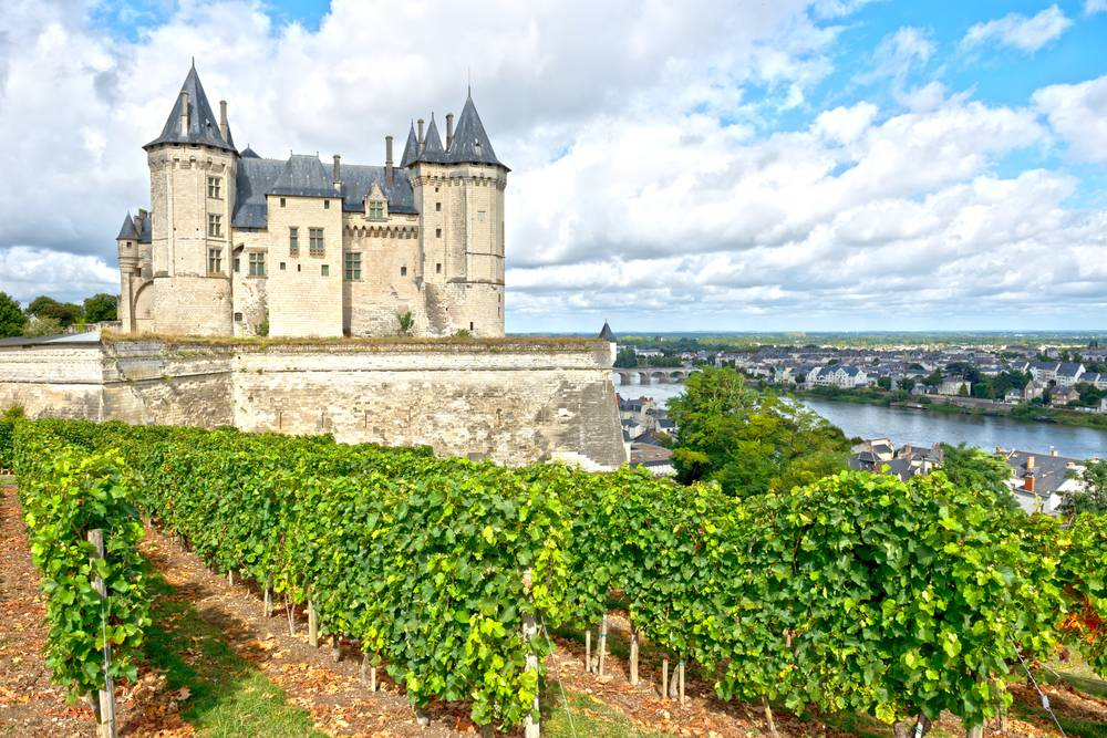 Turning the Spotlight on the Red Wines of the Loire