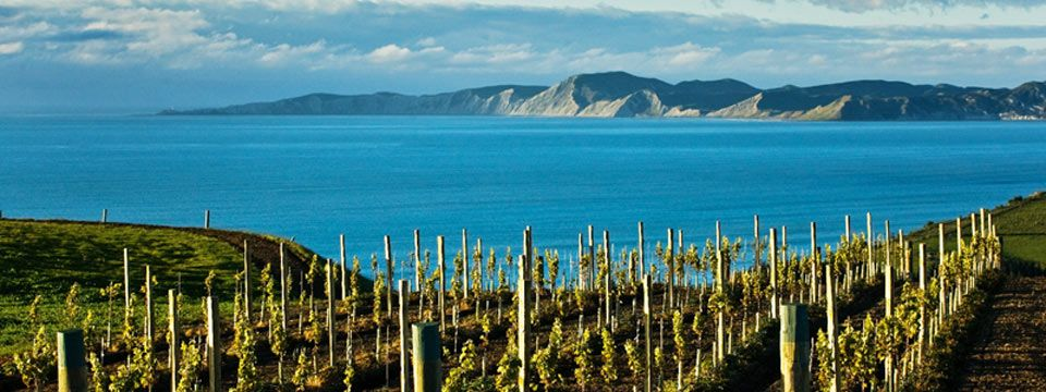 Purity in a Bottle:  New Zealand's Pristine and Forthright Wines