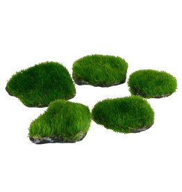 Aquaria UT Mini Moss Rock - 5 pk